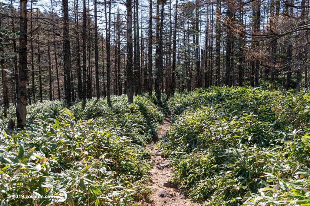 蓼科山登山口へ11月下山